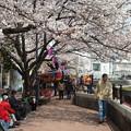 Photos: 桜の下でお楽しみ