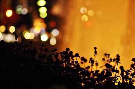 夜の噴水。
