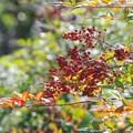 写真: 秋のキラメキ。