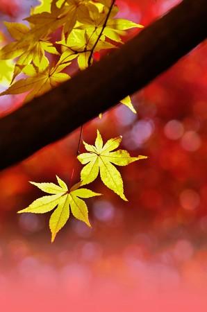木と黄、紅を従えて。