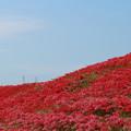 Photos: 赤い絨毯