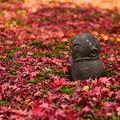 Photos: 落ち葉に囲まれて