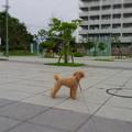 Photos: 7月4日朝のちゃこ