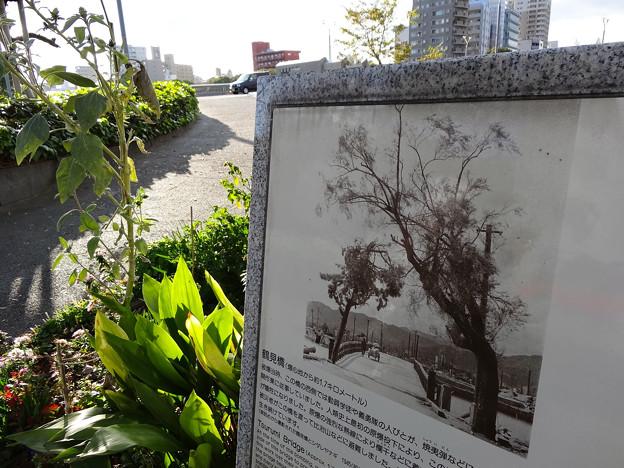 Atomic Bombed Tree Tsurumi Bridge weeping willow_3