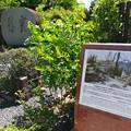 史跡 広島城 中国軍管区司令部 地下通信室跡 広島市中区基町