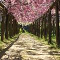 麗しき花咲けりゆたかにみのる 御栄光を顕す愛の清き祝福の花