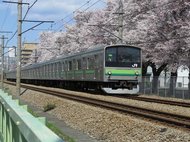 この満開の桜の前を205系が駆け抜けるのも、今年が最後です。@横...