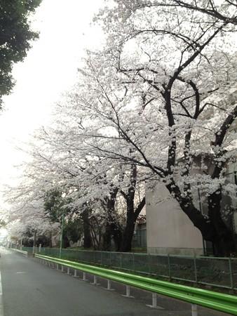 関東中央病院2
