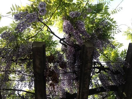 植物多様性センター3