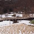Photos: 雪の水生植物園