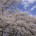 Photos: 野川公園(3)