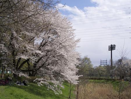 武蔵野公園(5)