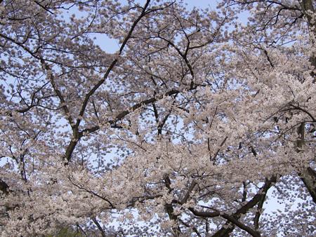 神代植物公園(11)