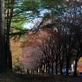 道の駅の秋3