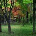 Photos: カエデの紅葉みつけました