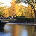噴水公園の紅葉3