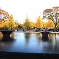 噴水公園の紅葉4
