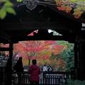 真正極楽寺・本堂の紅葉6