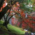 Photos: 築地塀周辺の紅葉