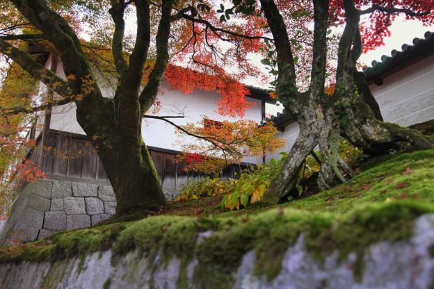 Photos: 築地塀周辺の紅葉2