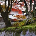 築地塀周辺の紅葉2