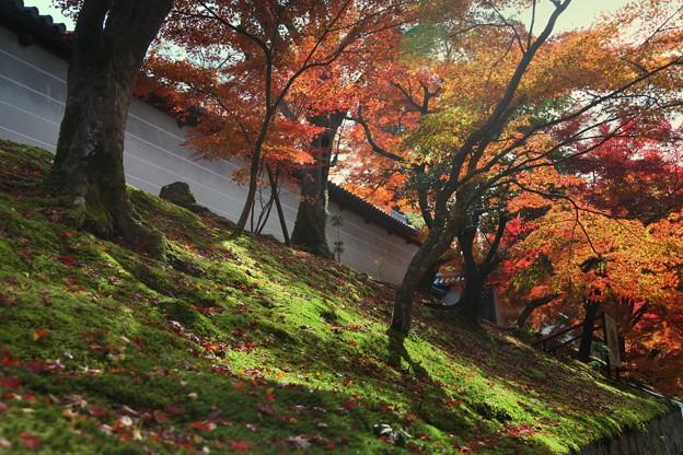 Photos: 築地塀周辺の紅葉4