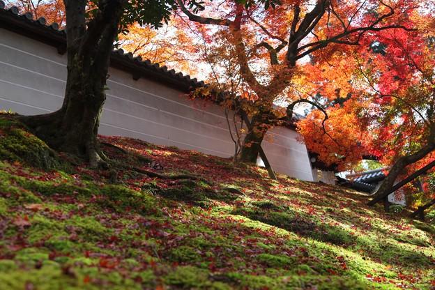 Photos: 築地塀周辺の紅葉5