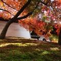 Photos: 築地塀周辺の紅葉6