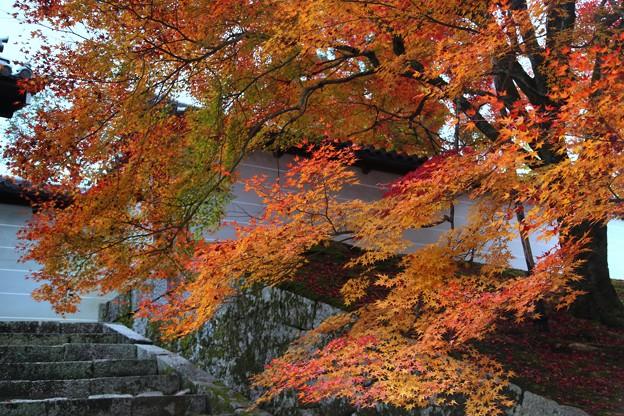 Photos: 勅使門付近と紅葉
