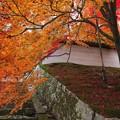 Photos: 勅使門付近と紅葉2