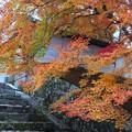 Photos: 勅使門付近と紅葉3