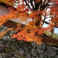 Photos: 勅使門付近と紅葉4