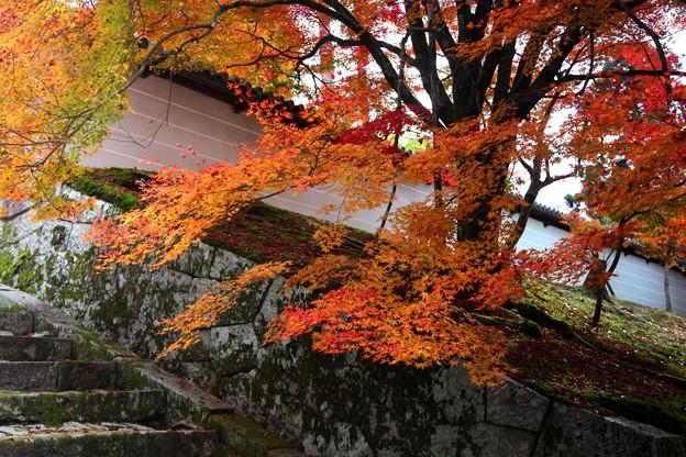 Photos: 勅使門付近と紅葉5