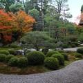 Photos: 鶴亀2