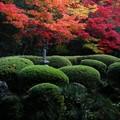 Photos: さつきと紅葉の庭
