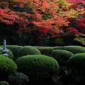 Photos: さつきと紅葉の庭2