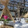 雪のぼたん苑2