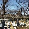 雪のぼたん苑5