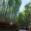 みどりの竹の路