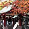 Photos: 上野東照宮の紅葉