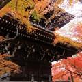 三重塔と紅葉