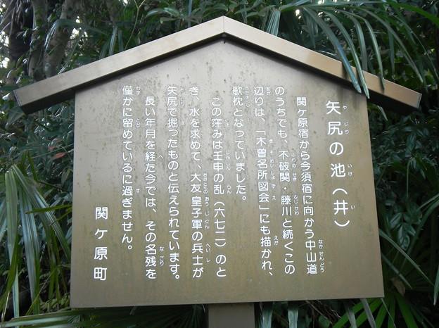 009矢尻の池(井)