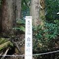 Photos: 011自害峯・三本杉 (2)