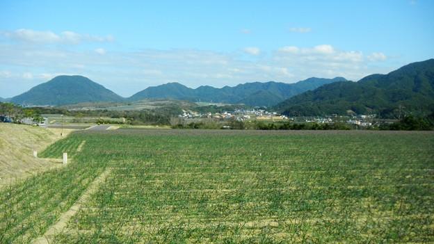 065らっきょう畑