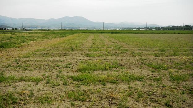 044中海干拓地・錦浜