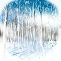 Photos: 冬