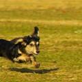 Photos: 飛行犬カノン