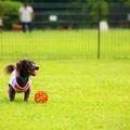 Photos: 僕、このボール好きなんだよ!