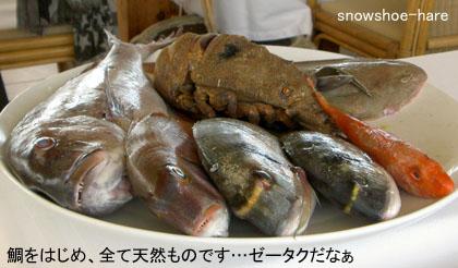 本日の魚(高そうなのばっかり!)