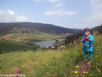 Photos: 山の春